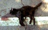 Загадочные убийства кошек в Денвере. Погибли уже 39 животных