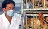 """ООН готовится к пандемии """"птичьего гриппа"""": 150 млн смертей"""