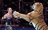 В Москве дрессировщик пострадал, вмешавшись в схватку тигров