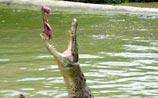 Парламент Австралии причислил крокодилов к рыбам