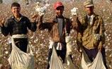 """""""Отец всех туркмен"""" сослал своих хякимов на хлопковые плантации"""