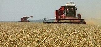Страны мира заключают тайные продовольственные контракты. В лидерах - Россия и Украина