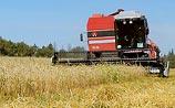 Путин запретил экспорт российского зерна. Мировые цены на пшеницу взлетели