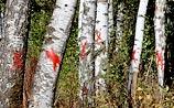 Властные верхи не верят, что Медведев спасет Химкинский лес. Это поперек закона и бизнеса