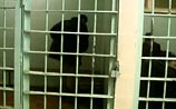 Адвоката, известного по делу об убийстве Свиридова, поймали с гашишем в СИЗО