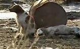 """ВИДЕО из Японии о """"бесконечной верности"""" собаки на руинах всколыхнуло интернет"""