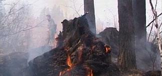 Экспертиза подтвердила: леса в Братске поливали соляркой