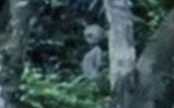 В бразильских джунглях туристы сняли на ВИДЕО пришельца и НЛО, впечатлив уфолога