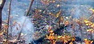 В Братске поймали двадцать поджигателей
