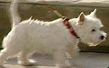 Город удивительных законов: после топающих котов взялись за собак