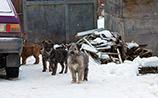 В уральском городке догхантеры за одну ночь убили десятки собак, включая домашних