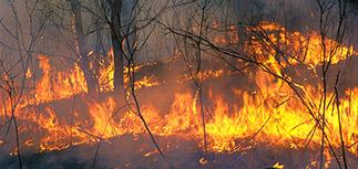 Пожар под Чернобылем: пламя движется в сторону АЭС