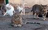 Власти Австралии объявляют войну бездомным кошкам. Убьют два миллиона
