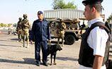 Египет начал собственное расследование возможного теракта на борту А321
