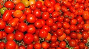 Турция пригрозила ответными мерами на ограничение ввоза овощей в Россию