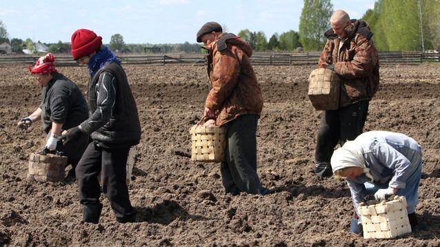 Россельхознадзор: выращивать можно, продавать - нет