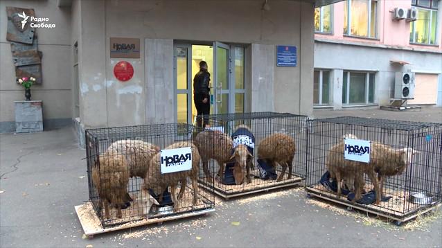 """К зданию """"Новой газеты"""" привезли клетки с овцами в жилетах с надписью """"пресса"""""""