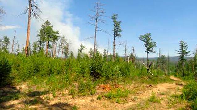 В Иркутской области начал действовать новый режим ЧС. Теперь из-за лесных пожаров