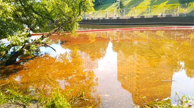 Загрязнение из-за нефтеразлива в Химкинском водохранилище в тысячу раз превысило норму