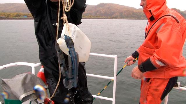 На Камчатке нашли еще два места массовой гибели морских животных